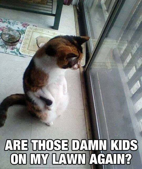 just something funny cat memes � those damn kids cats