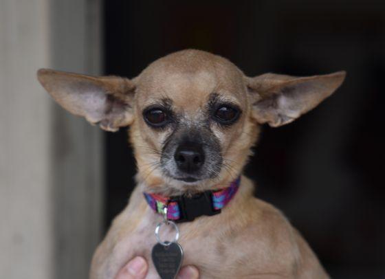 Adopt Juniper On Petfinder In 2020 Help Homeless Pets Dog Adoption Homeless Pets