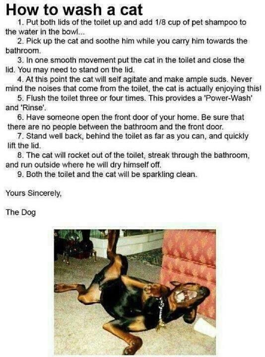How to wash your cat.  Instructions from a dog.