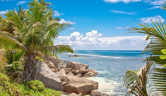 Koop 'Palm Beach' van Alex Hiemstra voor aan de muur.