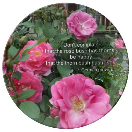 Rose Bush Happy Pink Roses Quote German Proverb