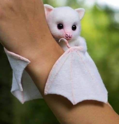 Kelelawar Unik Berwarna Putih Binatang Lucu Bayi Hewan Hewan