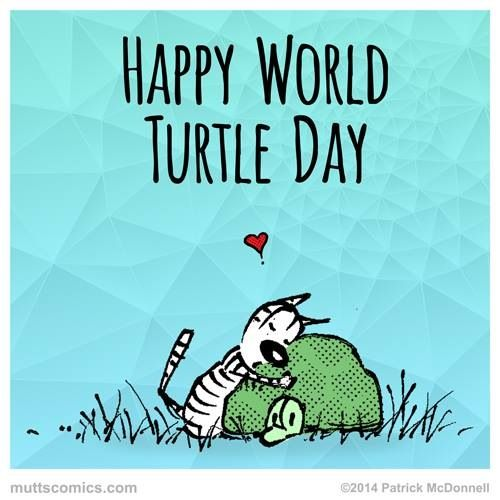 Happy world turtle day: