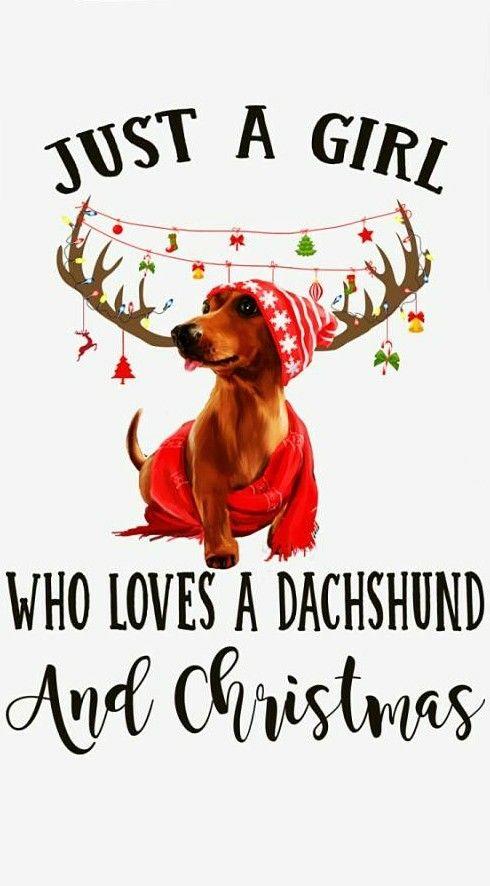 Christmas Christmas Dog Dachshund Dachshund Puppies