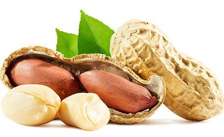 (Zentrum der Gesundheit) – Erdnüsse sind – wider Erwarten – sehr gesund, ja, ein regelrechtes Superfood. Die kleinen Kraftpakete sind eine prima Eiweissquelle und versorgen mit wertvollen Vitalstoffen. Doch sind Erdnüsse auch ziemlich fetthaltig. Interessanterweise verbessern sie dennoch ausgerechnet die Blutfettwerte und sorgen überdies für gesunde und elastische Blutgefässe. Allerdings sind Erdnüsse nicht in jeder Form empfehlenswert. Wie Sie Erdnüsse am besten einsetzen, besprechen wir im…
