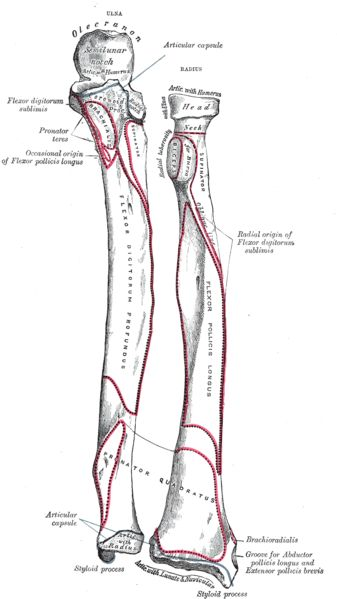 anatomy physiology short essay questions