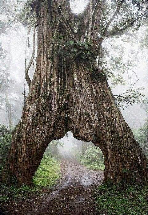 Furo na árvore...