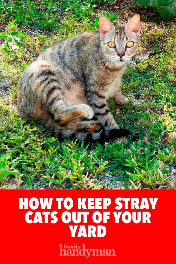 How To Keep Cats Out Of Your Yard Cat Repellant Outdoor Cats Cat Repellant
