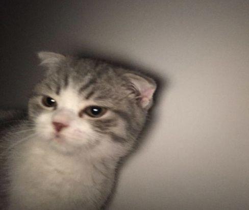 ﻌ ฅ Cute Baby Cats Cute Cat Memes Pretty Cats