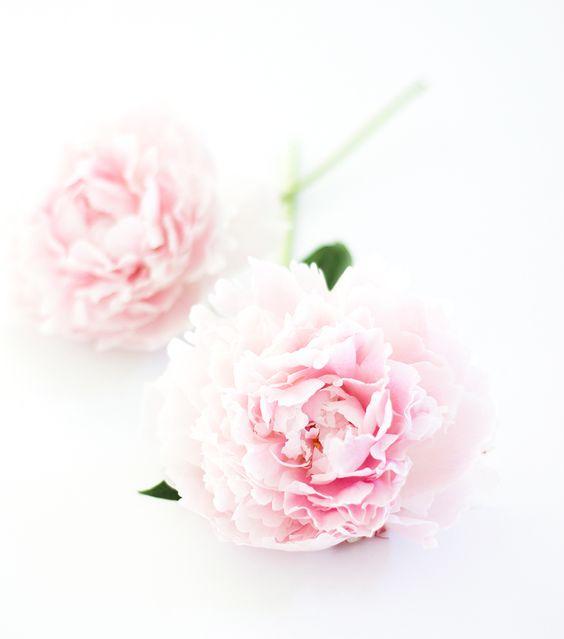 Kalender Juli Blumen