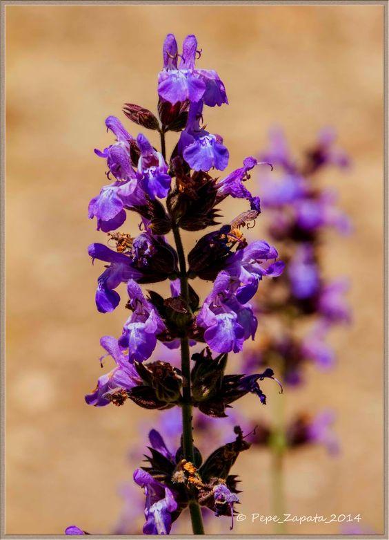Fotografias: Flores.