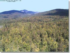 Der Nationalpark Bayerischer Wald - Internetangebot
