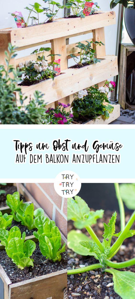 Tipps um Obst und Gemüse auf dem Balkon anzupflanzen