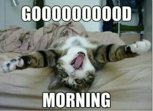 Image result for good morning, lazy day