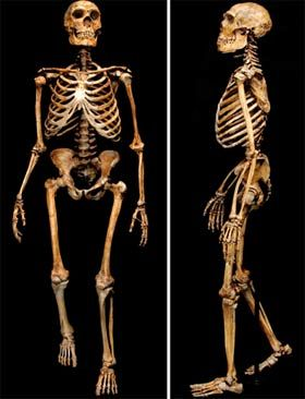 El esqueleto del Neanderthalensis constaba de una altura de 1,65 m, de contextura pesada, y musculatura robusta. Tenía brazos y muslos relativamente más largos, piernas más cortas. La pelvis presenta, en comparación a H. sapiens, una rama del pubis más delgada y elongada. Este rasgo se observa tanto en los machos como en las hembras así que se relacionaba con el parto , sino a una diferencia no muy evidente en el desplazamiento o locomoción entre H. sapiens y H. neanderthalensis.