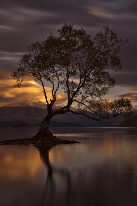 The Wanaka Tree,  New Zealand, by Ingrid Kjelling, on 500px.