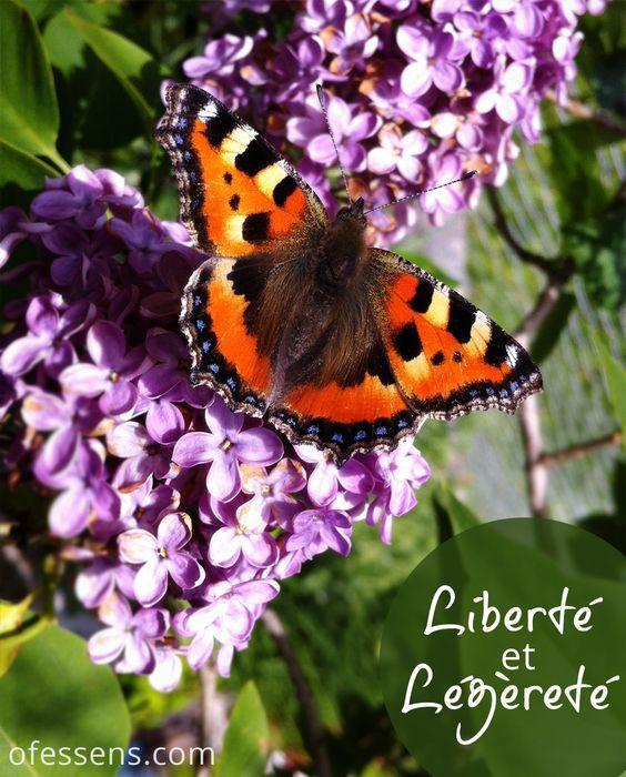 Papillon sur lilas, heureusement le i-phone dans la poche, le cadeau du matin, ça met de  bonne humeur! #envoldujour