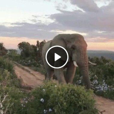 Um elefante visto de perto
