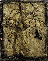 Blackbird Art for Sale