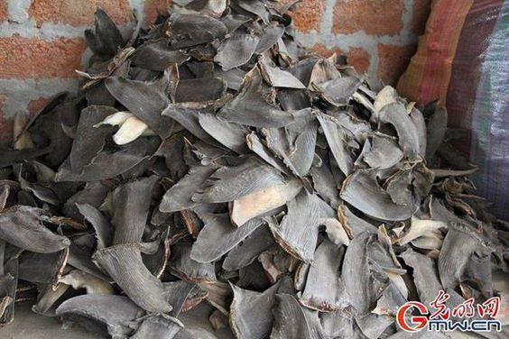 厄警方查獲非法走私魚翅20萬片。(圖/取自光明網)