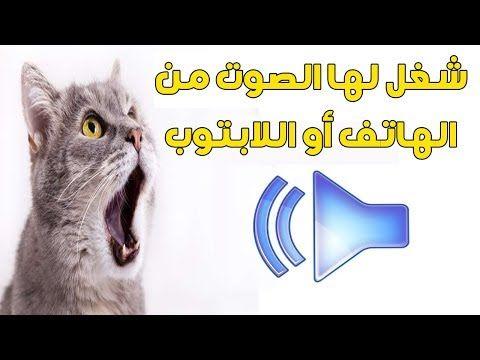 هذه الأصوات ستجعل قطتك مجنونة وتبحث عن مصدر الصوت Youtube