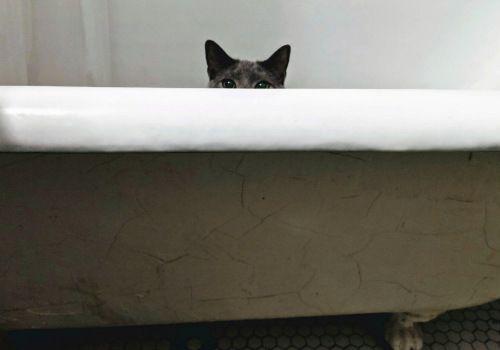 Why Do Cats Follow You Into The Bathroom Cat Checkup Cat Behavior Cats Happy Cat