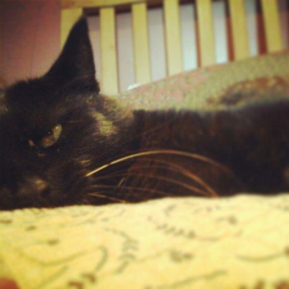 My cat ● Cadi #cat #lovecats #ilovemycat #photography