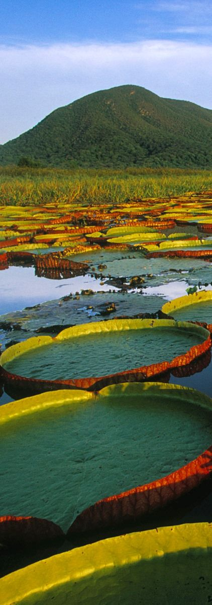 ~Pantanal Mato-Grossense, Brazil | The House of Beccaria