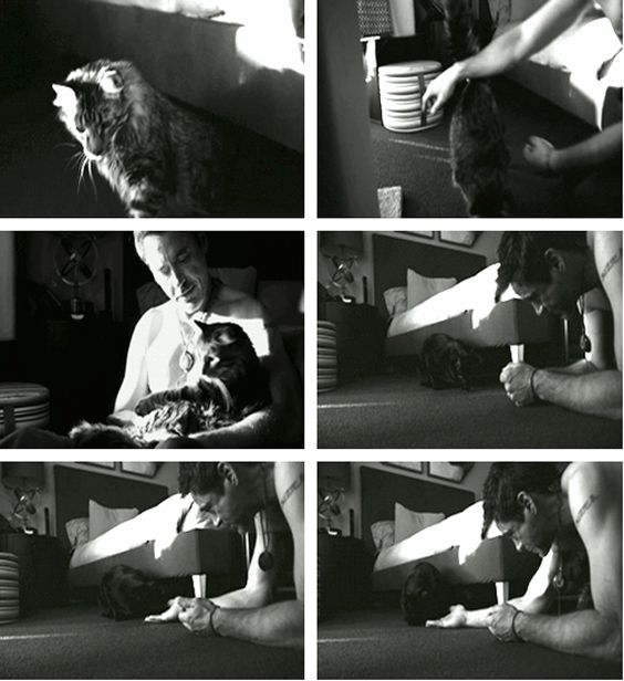 "RDJ and his cats, Monty and Dart (from the film ""New Life""): Dart, Rdj Jeremy, Cats Monty, Role Models"