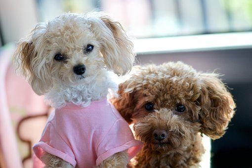 Greensboro Nc Maltese Meet Lucy A Dog For Adoption Maltese Dogs Dog Adoption