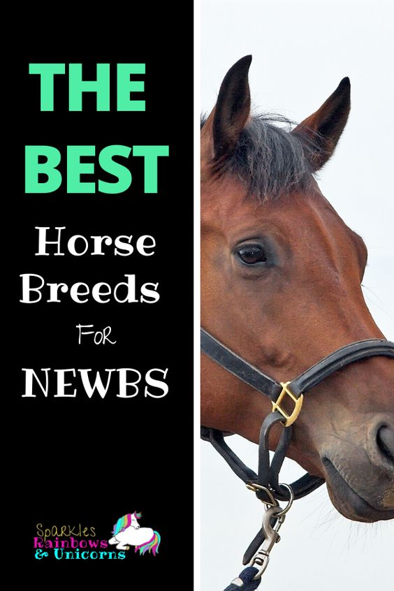 As a rider just getting started you may be wondering what the best horse  breeds for beginners are. Maybe you want to lease a horse or someday buy  a horse of your own, or maybe your just plain curious. #beginnerhorsebreeds #calmhorsebreeds #friendlyhorsebreeds