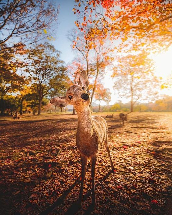 Mesmerizing Nature (@mesmerizing.nature) • Instagram photos and videos