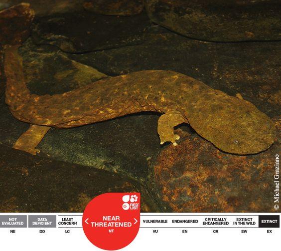 Amazing Amphibians Biodiversity Is The Backbone Of All Life On - Us amphibian distribution maps