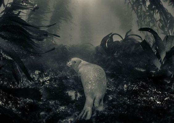 La nature regorge d'animaux somptueux qui ne cessent de nous émerveiller par leur beauté. Des photographes ont eu pour mission de capturer les moments de vie de la faune sauvage... SooCurious vous présente donc 22 incroyables clichés pris dans le milieu naturel d'esp&e...