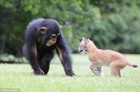 Varli and Sutra love to hang out with each other in their Wildlife Park in South Carolina