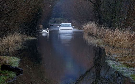 A car drives through flood water on the Somerset Levels near Langport. As weather forecasters predict more stormy weather, many villages on the Somerset Levels have faced weeks of flooding with the village Muchelney cut off because of flooded roads for almost a month.Picture: Matt Cardy/Getty Images