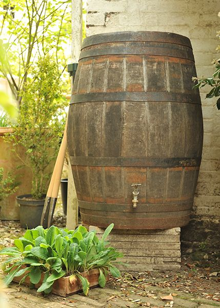 Barrel for collecting rain water!  Would love this. I think I can get a barrel at the Pottstown Recycling Center.:
