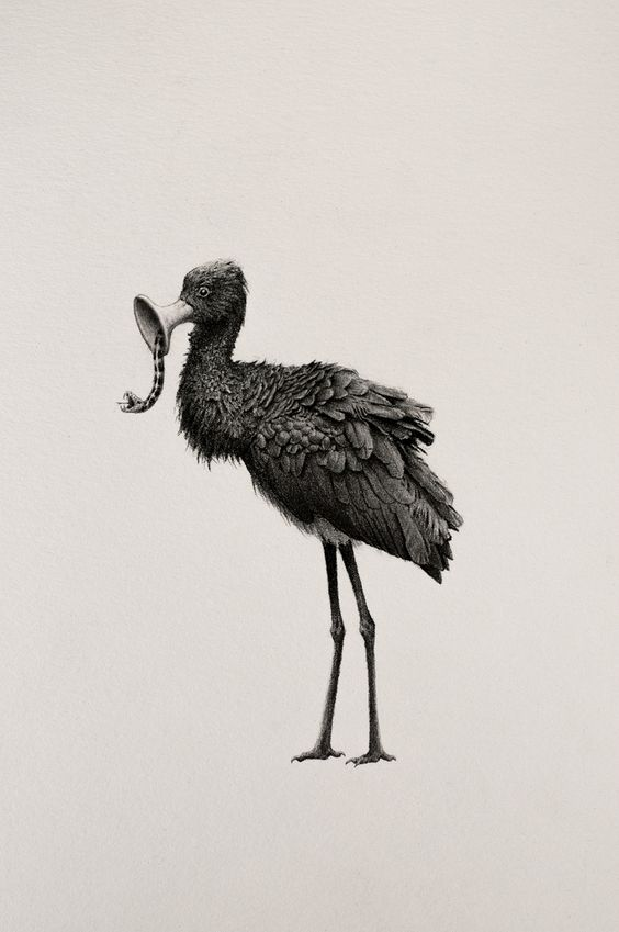 Bestiary of Improbable Animals by Mateo Pizarro http://designwrld.com/bestiary-animals-mateo-pizarro/