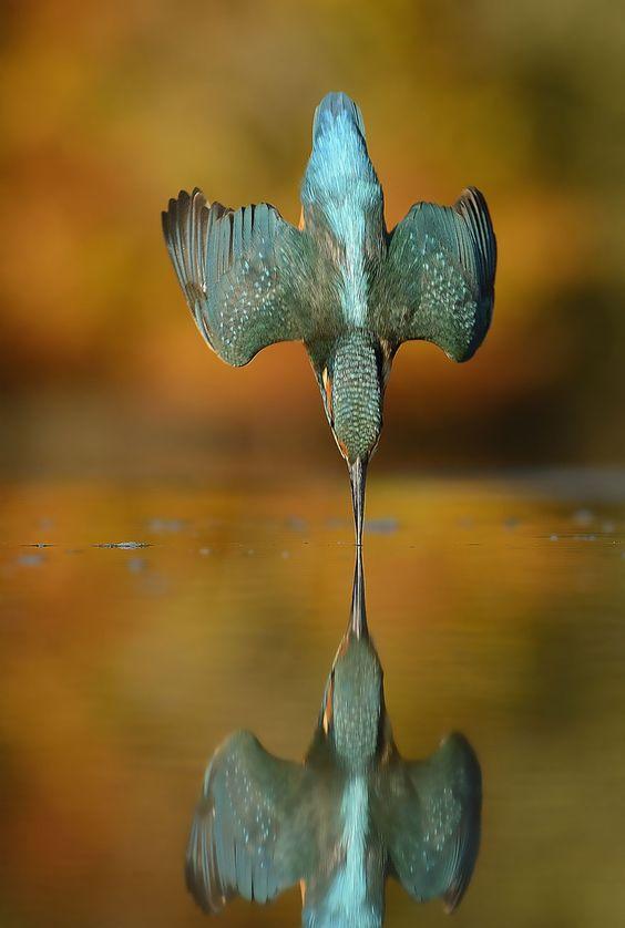 La photo parfaite dun martinpêcheur en train de pêcher  2Tout2Rien