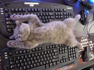 Top 5 des chats qui dorment dans de drôles de positions - Animalblog #Miaoubox: