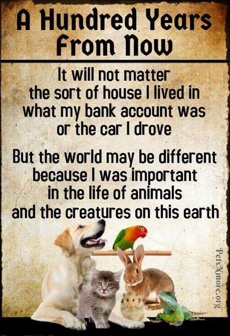 Vegans pets and animals on pinterest - Animal pak motivational quotes ...