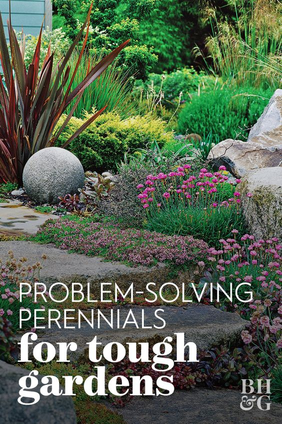 For every problem area in your landscape, you'll find perennials that not only survive but also thrive in the conditions available. Simply match the preferred growing conditions of each perennial to your site. #gardening #gardenideas #perennialtips #perennialflowers #perennialgarden #bhg