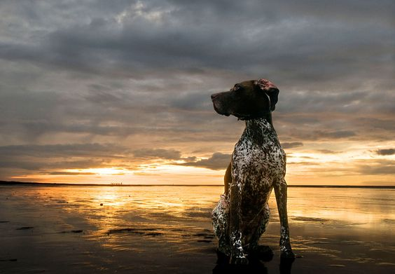Dog by Sunset by Daniel Bosma