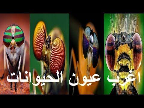 عالم الحيوان واغرب عيون الحيونات والحشرات في العالم Animals Weird Animals Weird World