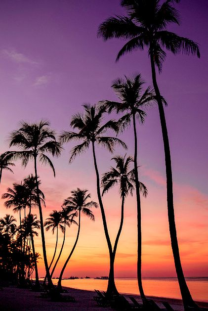 Image for Beach Sunset With Palm Trees Wallpaper Free
