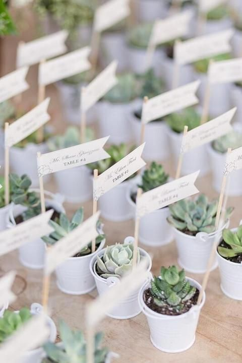 Inexpensive Wedding Favors Unusual Wedding Favours To Make Unique Wedding Favor Idea Unusual Wedding Favours Succulent Wedding Favors Unique Wedding Favors