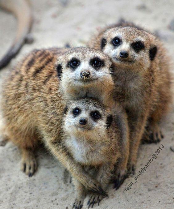 animales con sus crías