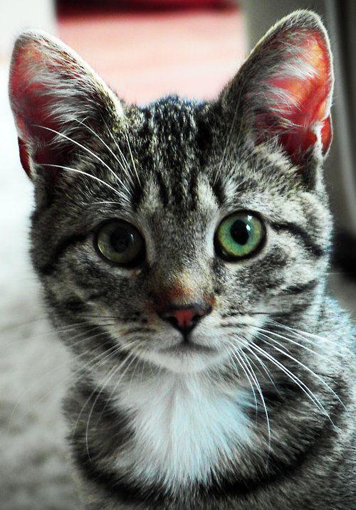 Lovely-KittyCats, kitt3nl0ve: ~Miesjelluh