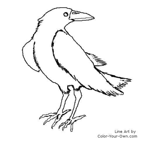 Raven Coloring Pages Coloring Pages Raven Color