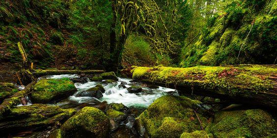 American Jungle Photograph by Chad Dutson